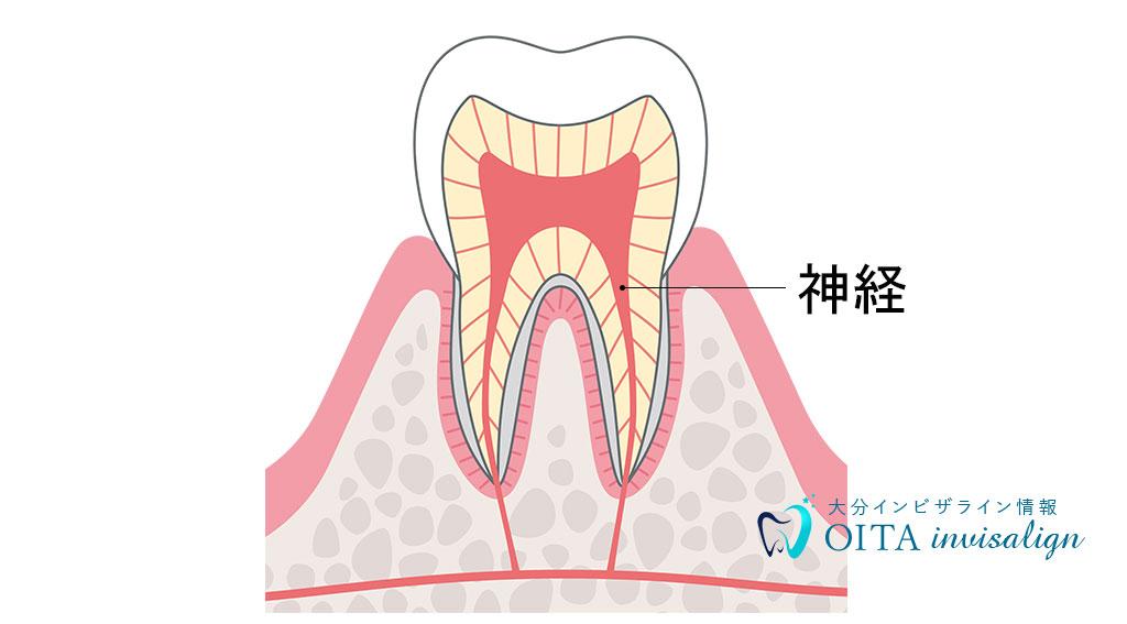 歯の神経とは